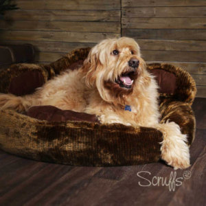 Grizzly Bear Dog Bed